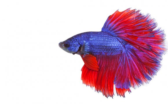 Betta fish care for kids
