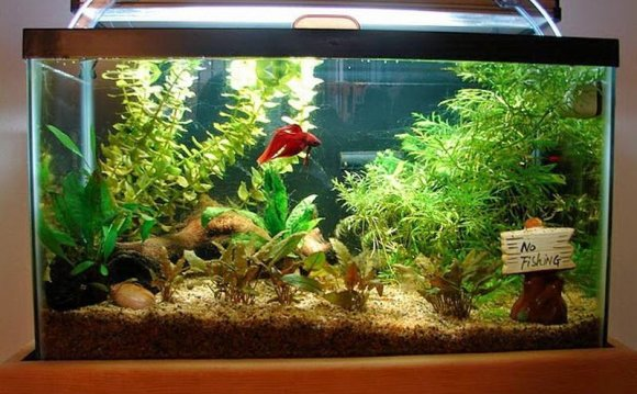 Ideal Betta fish tank
