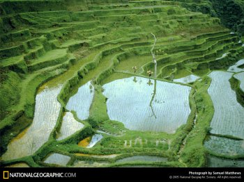 rice-fields-154515-sw