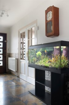 Setting up and Caring for an Aquarium at Home - Quicken Loans Zing Blog