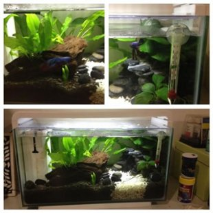 Thanks @nappleton_ for sharing your betta tank setup with us on Twitter :)