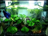 Betta care Tips