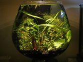 Betta fish bowl temperature