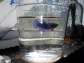 Betta fish small bowl