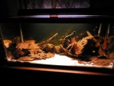 Dark water Aquarium