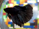 Funny fighting fish names
