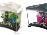 Marina Betta fish tank