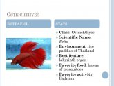 Scientific name for Betta fish