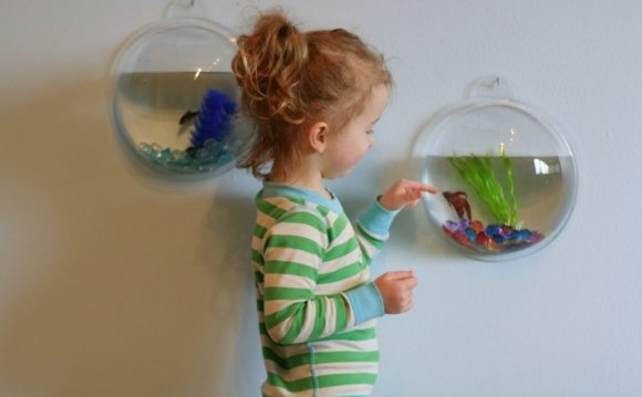 Wall Mounted Betta fish bowl